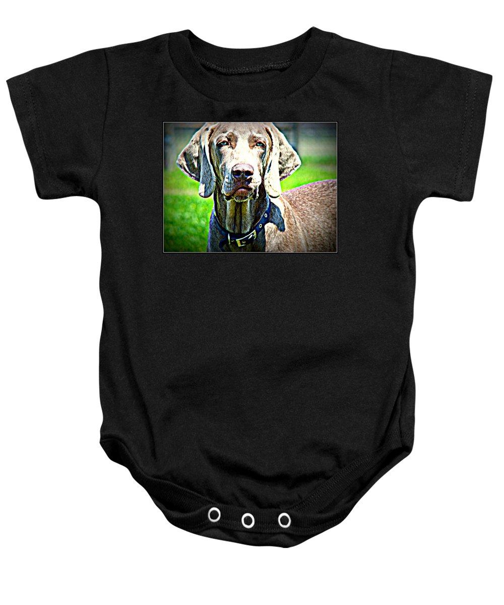 Dog Weimaraner Baby Onesie featuring the photograph Watchful Weimaraner by Alice Gipson