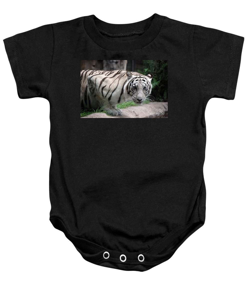 White Tiger Baby Onesie featuring the photograph White Bengal Tiger by Robert Meanor