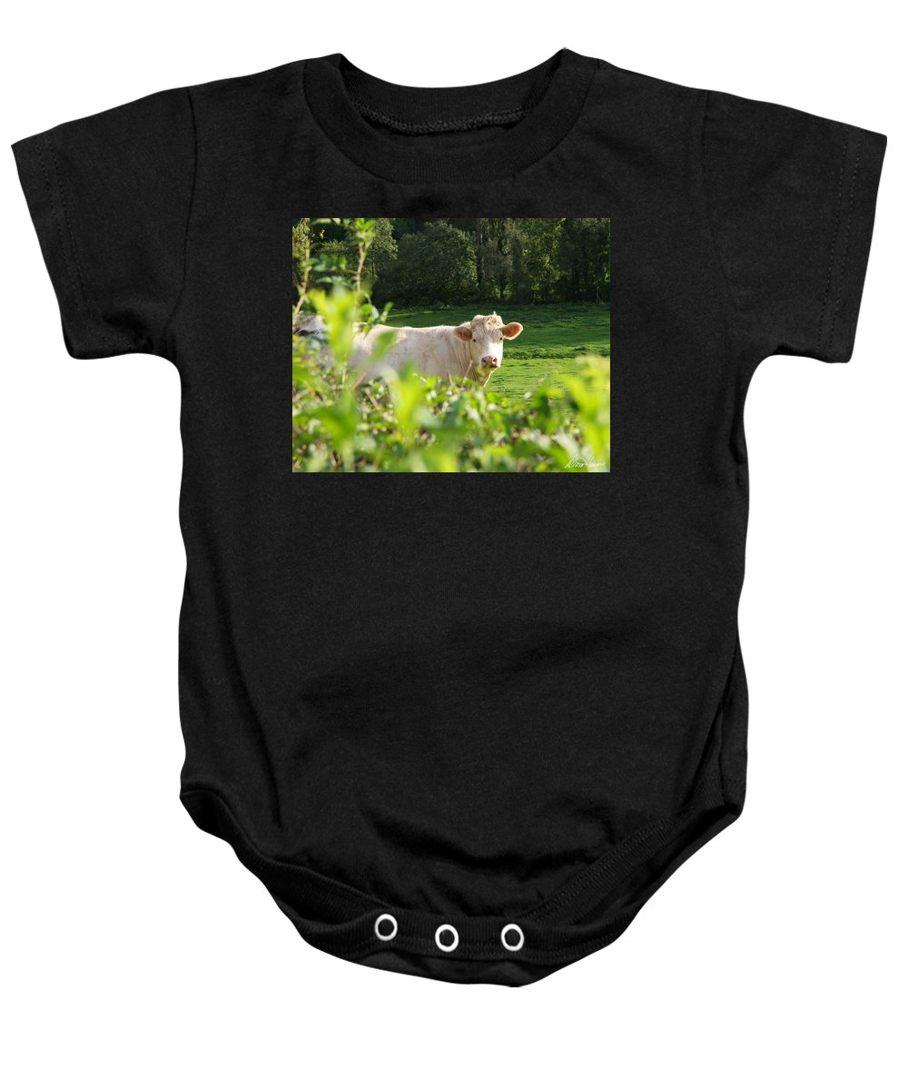 White Baby Onesie featuring the photograph White Cow by Diana Haronis