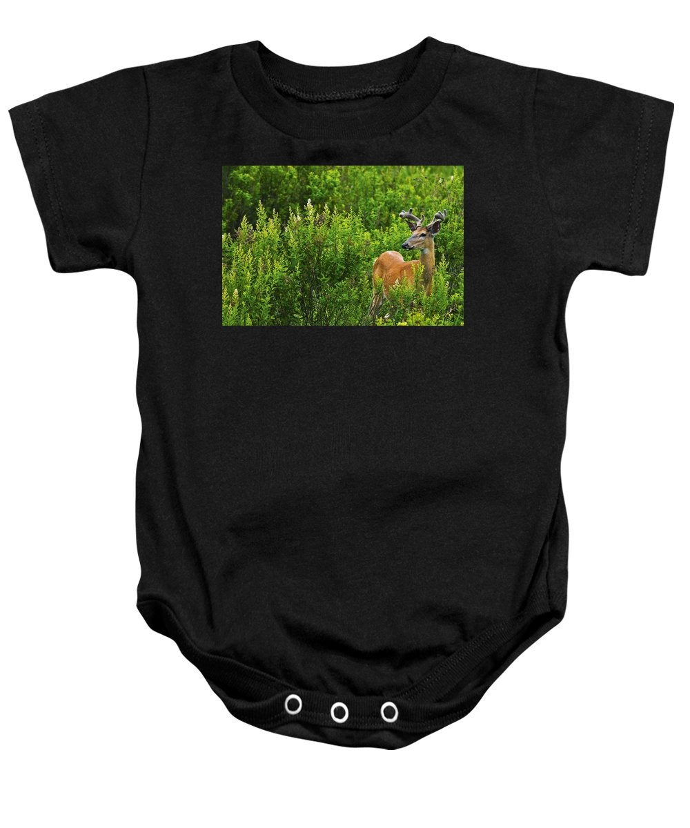 Bushes Baby Onesie featuring the photograph Whitetail Deer In Meadow, Killarney by Mike Grandmailson