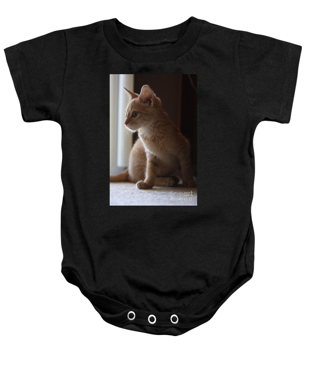 Kittens Baby Onesie featuring the photograph Window Light by Kim Henderson