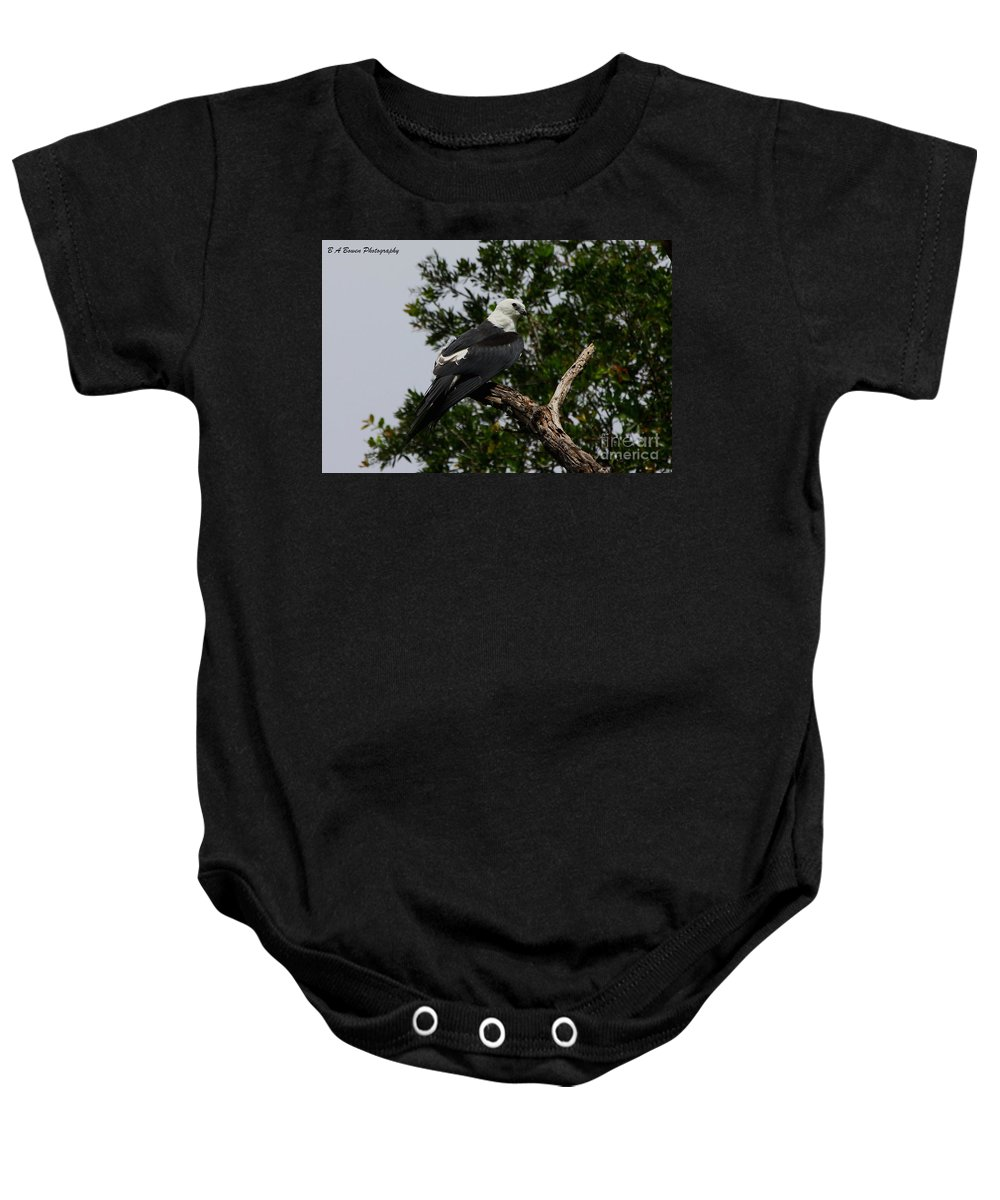 Swallow-tailed Kite Baby Onesie featuring the photograph Young Swallow-tailed Kite by Barbara Bowen
