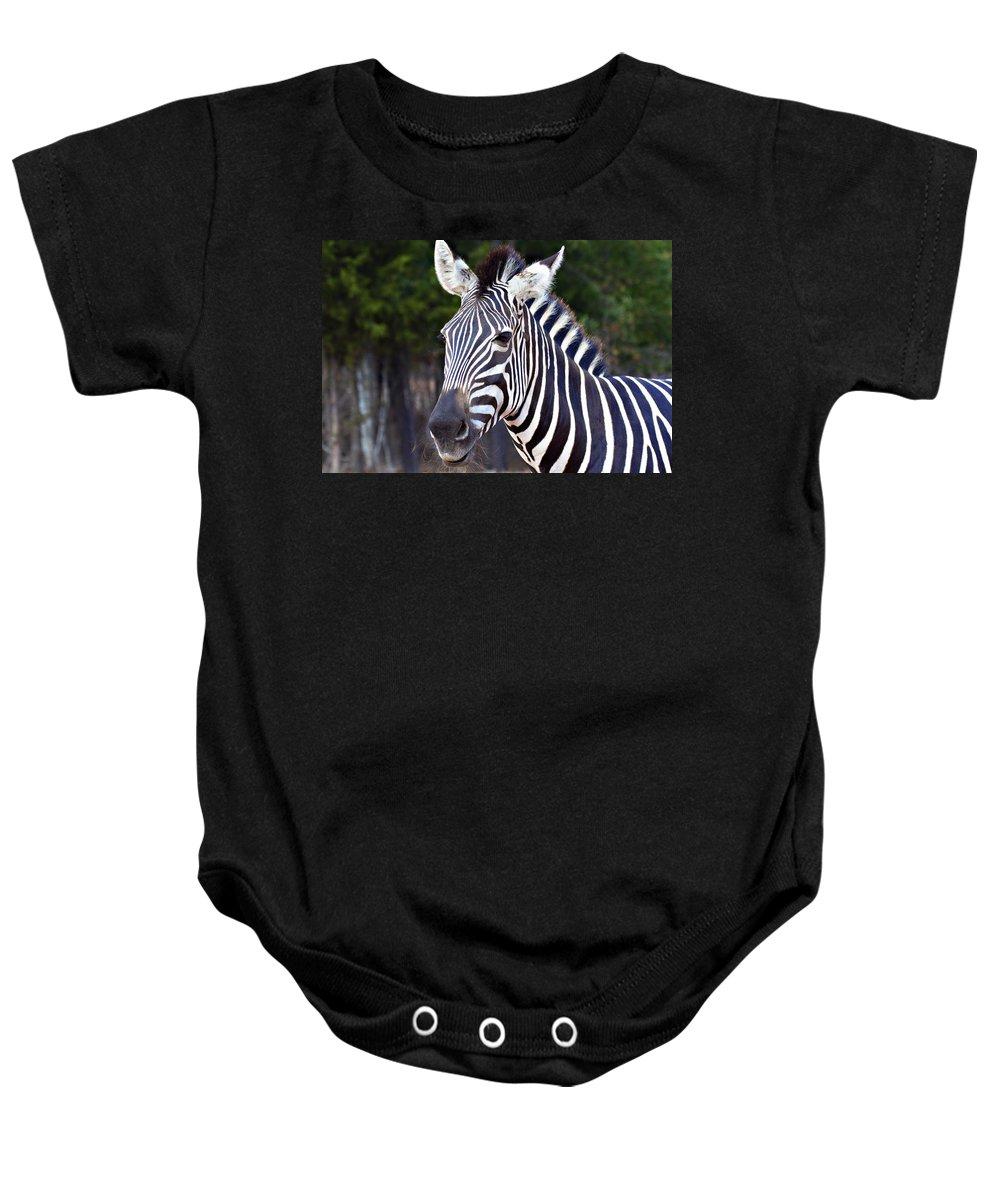 Zebra Baby Onesie featuring the photograph Zebra Symmetry by Douglas Barnard