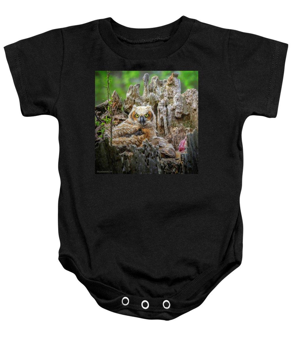 Great Horned Owl Baby Onesie featuring the photograph Baby Great Horned Owl by LeeAnn McLaneGoetz McLaneGoetzStudioLLCcom