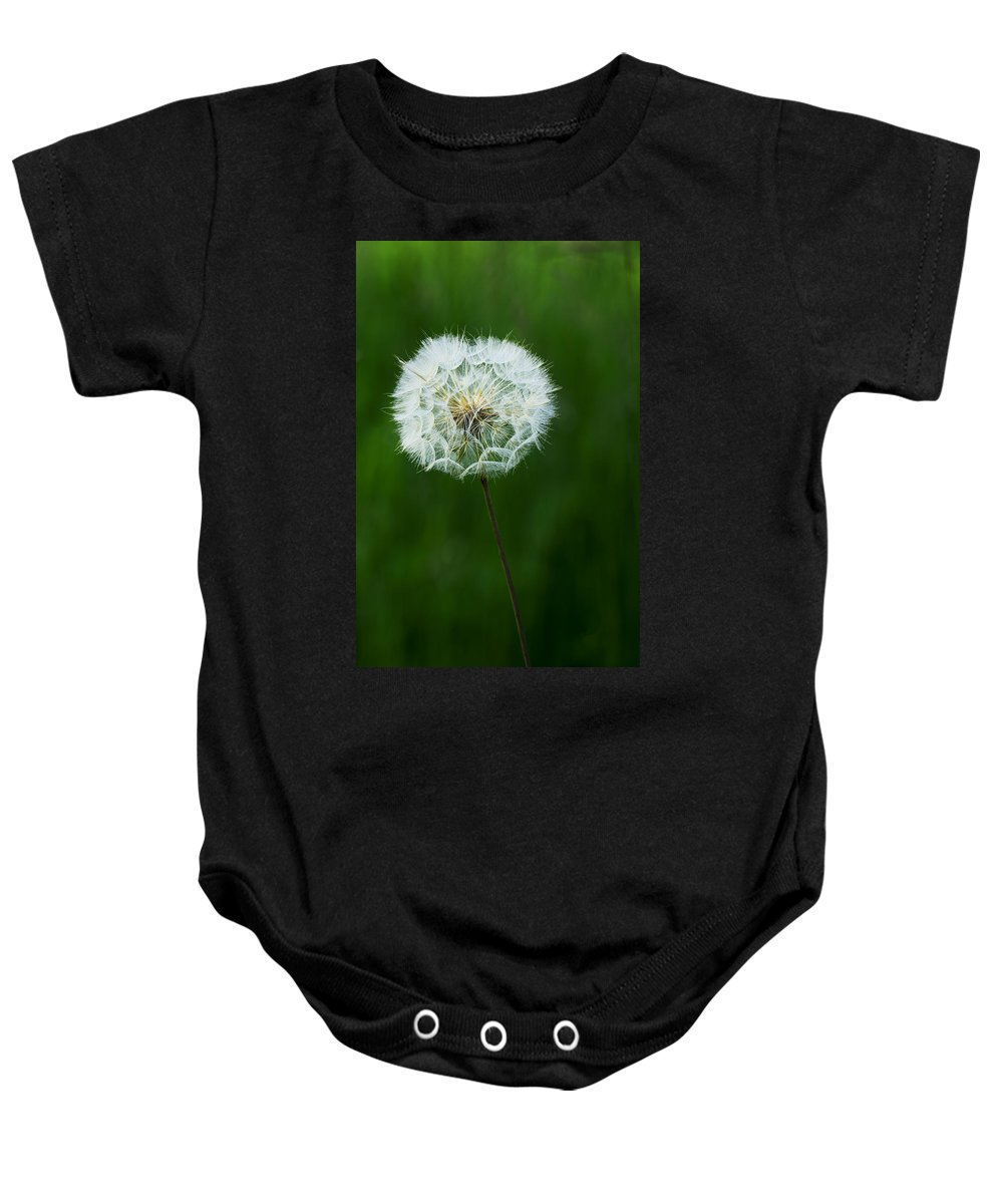 Beautiful Baby Onesie featuring the photograph Dandelion by Ivan Slosar