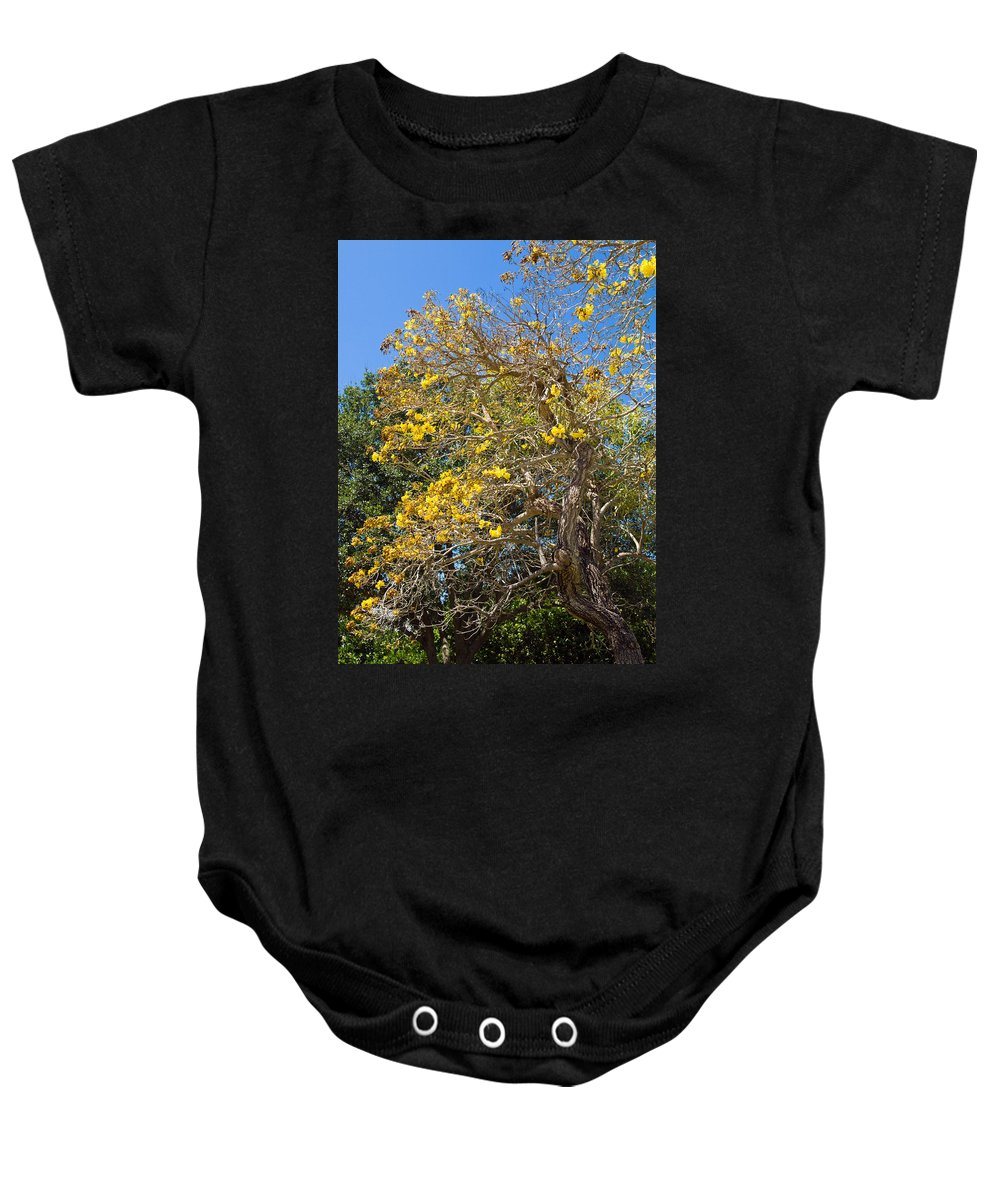 Florida; Tree; Plant; Flower; Flowering; Blossom; Blossoming; Jerusalem; Thorn; Possom; Mexican; Pal Baby Onesie featuring the photograph Jerusalem Thorn Tree by Allan Hughes