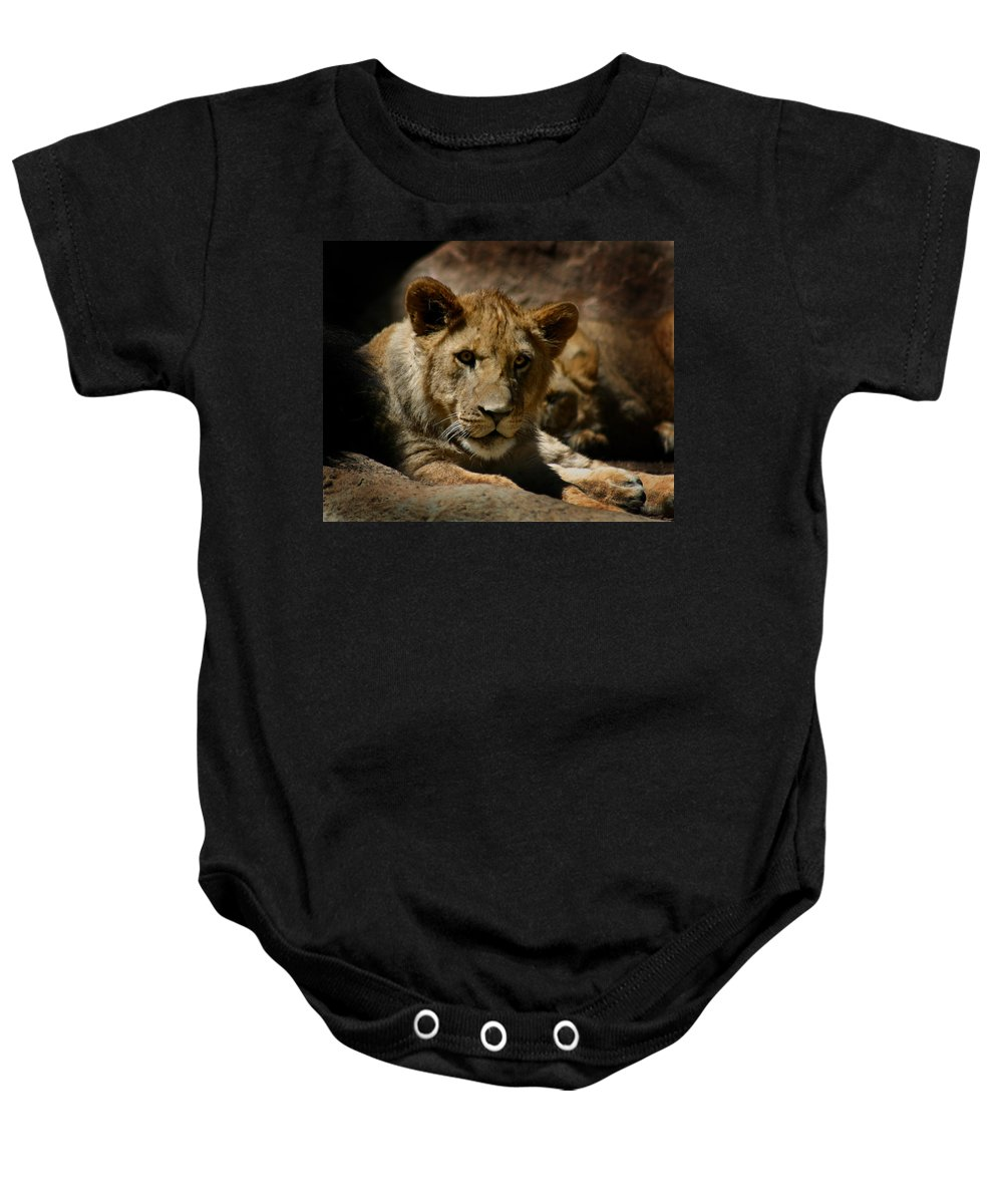 Lion Baby Onesie featuring the photograph Lion Cub by Anthony Jones
