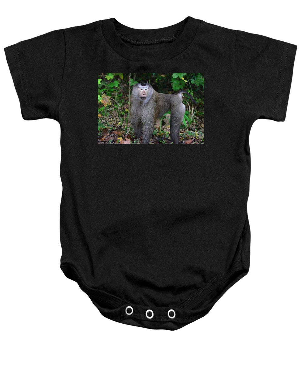 Pig-tailed Baby Onesie featuring the photograph Pig-tailed Macaque by David Hohmann