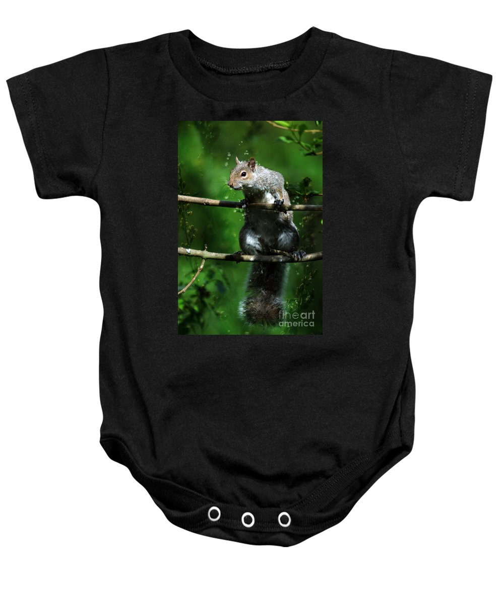 Squirrel Baby Onesie featuring the photograph The Squirrel From Fairyland by Angel Tarantella