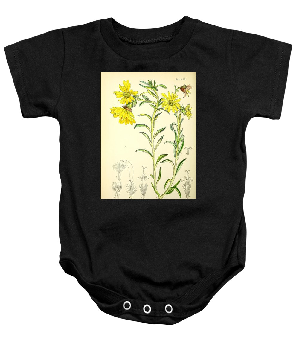 Illustrations Of The Flowering Plants And Ferns Of The Falkland Islands Baby Onesie featuring the painting Illustrations Of The Flowering Plants And Ferns Of The Falkland Islands by MotionAge Designs