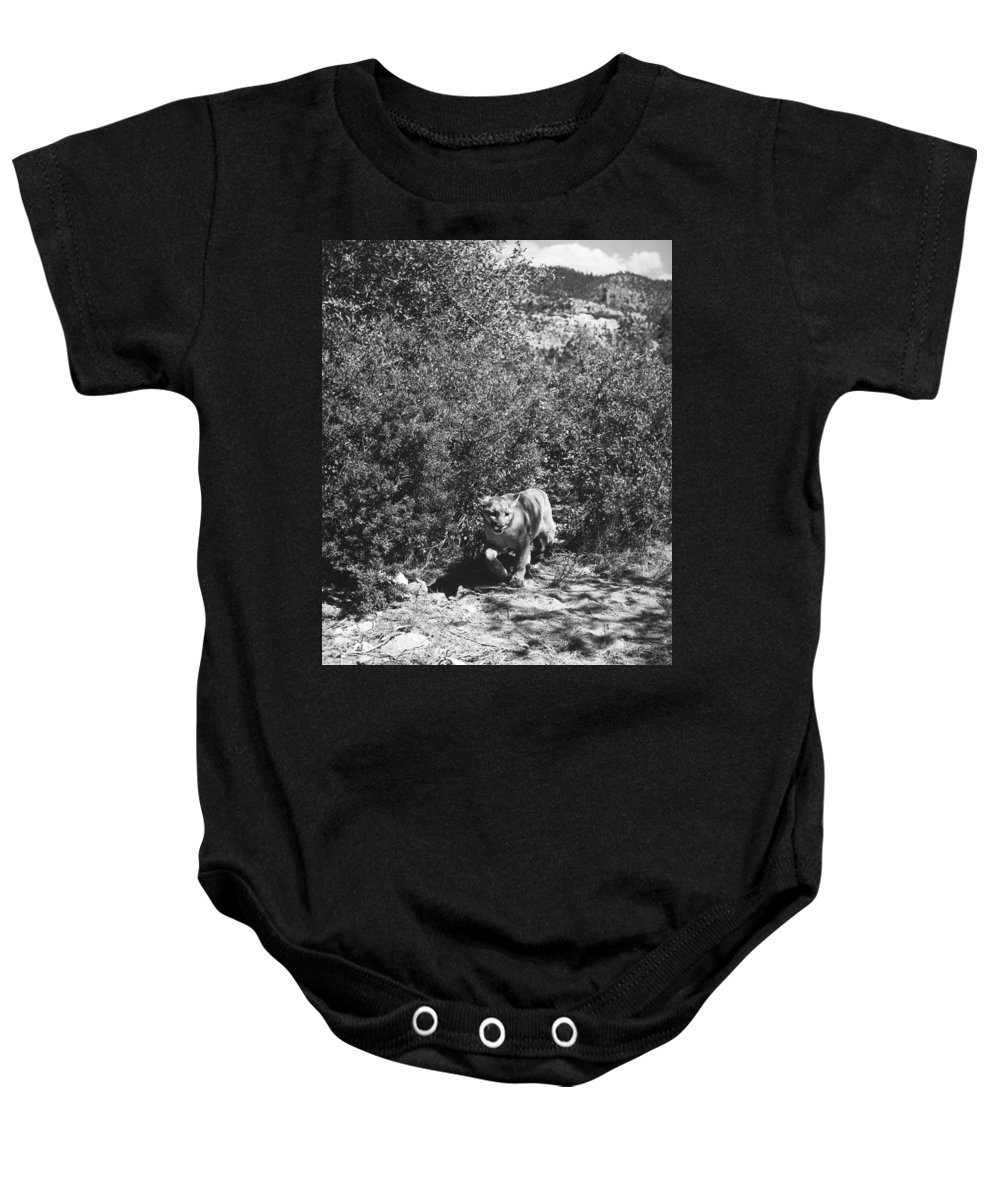 20th Century Baby Onesie featuring the photograph Cougar by Granger