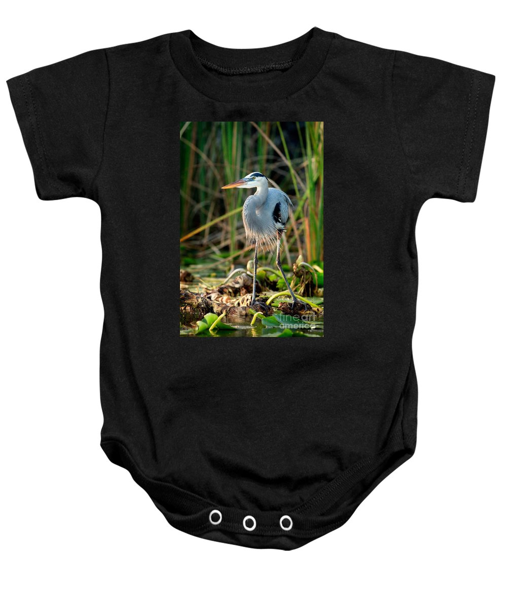 Great Blue Heron Baby Onesie featuring the photograph Great Blue Heron by Matt Suess