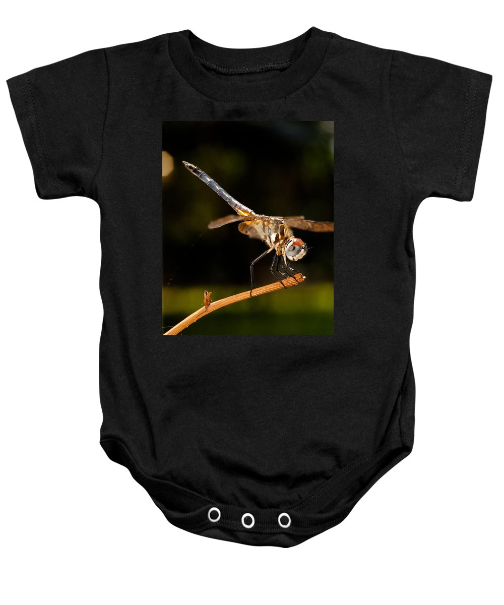Dragonfly Baby Onesie featuring the photograph A Dragonfly by Christopher Holmes