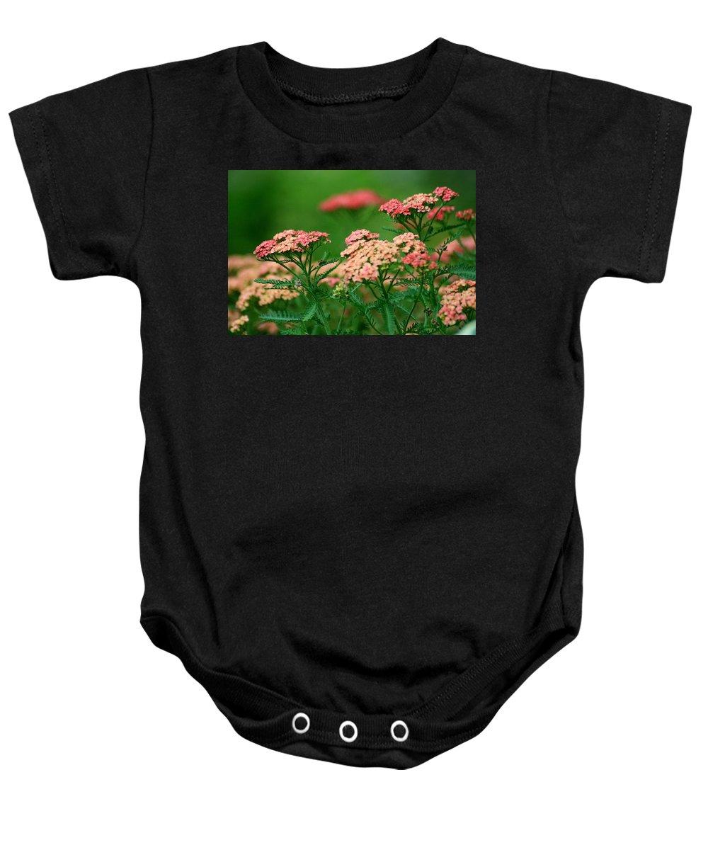 Yarrow Baby Onesie featuring the photograph Achillae's Heel by Marla McFall