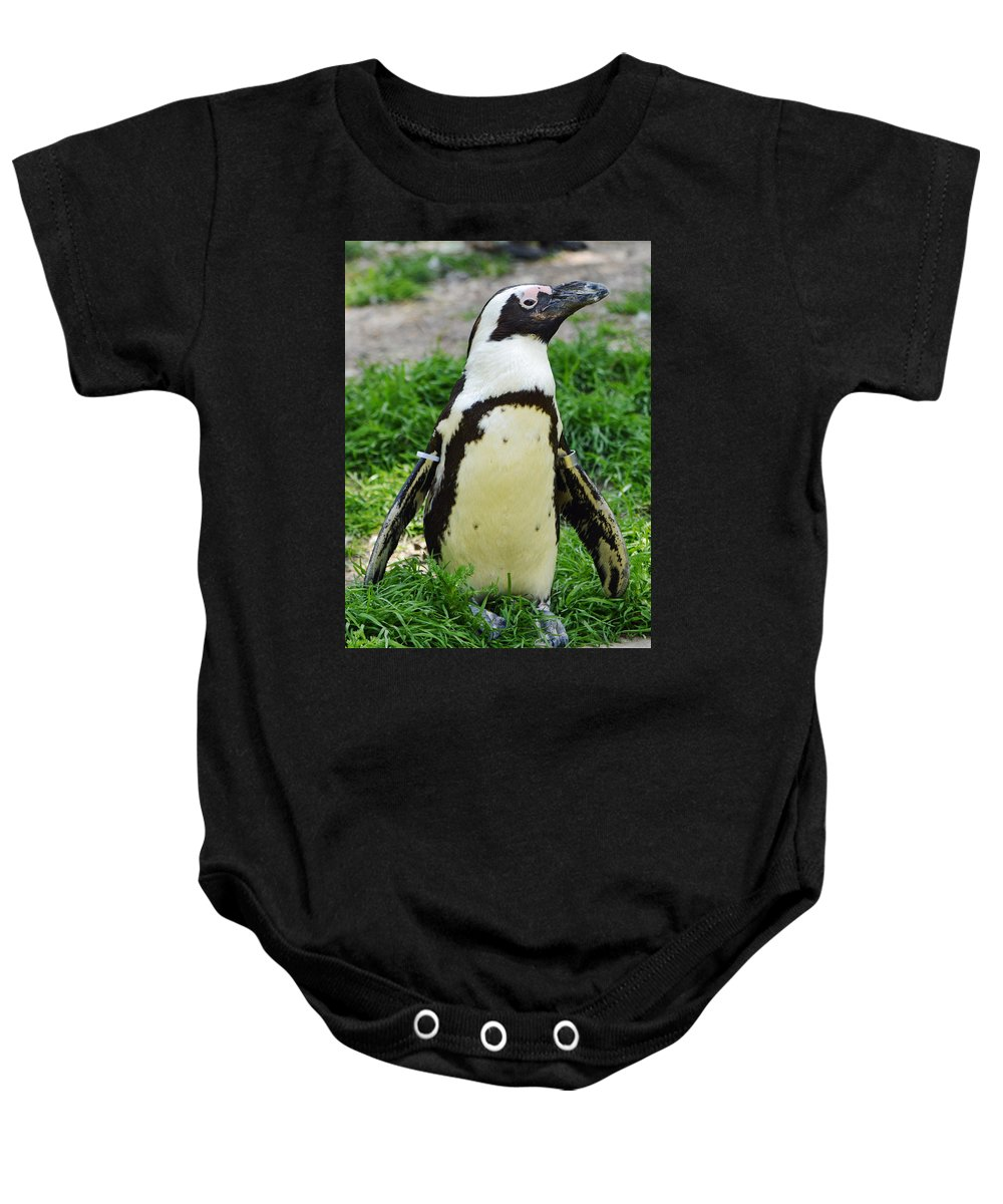 African Penguin Baby Onesie featuring the photograph African Penguin by Ellen Henneke