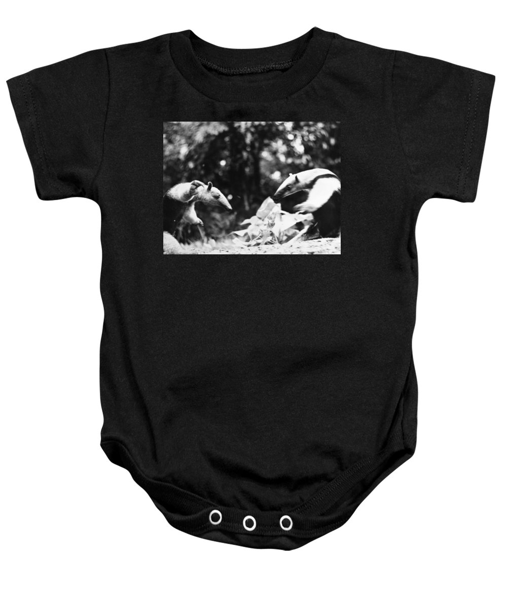 20th Century Baby Onesie featuring the photograph Amazon: Anteater by Granger