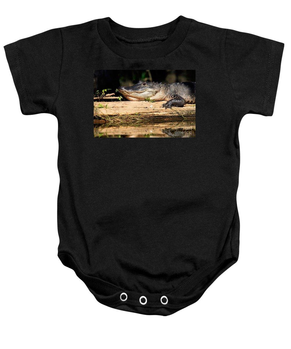 American Alligator Baby Onesie featuring the photograph American Alligator Suns Itself by Matt Suess