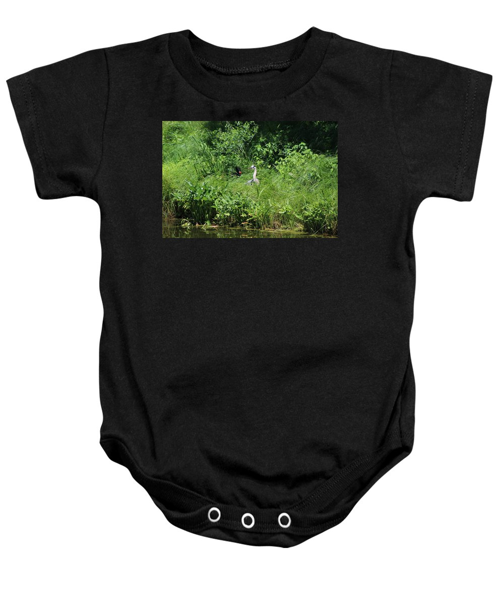 Marsh Baby Onesie featuring the photograph Annoyed - Heron and Red Winged Blackbird 5 of 10 by Colleen Cornelius