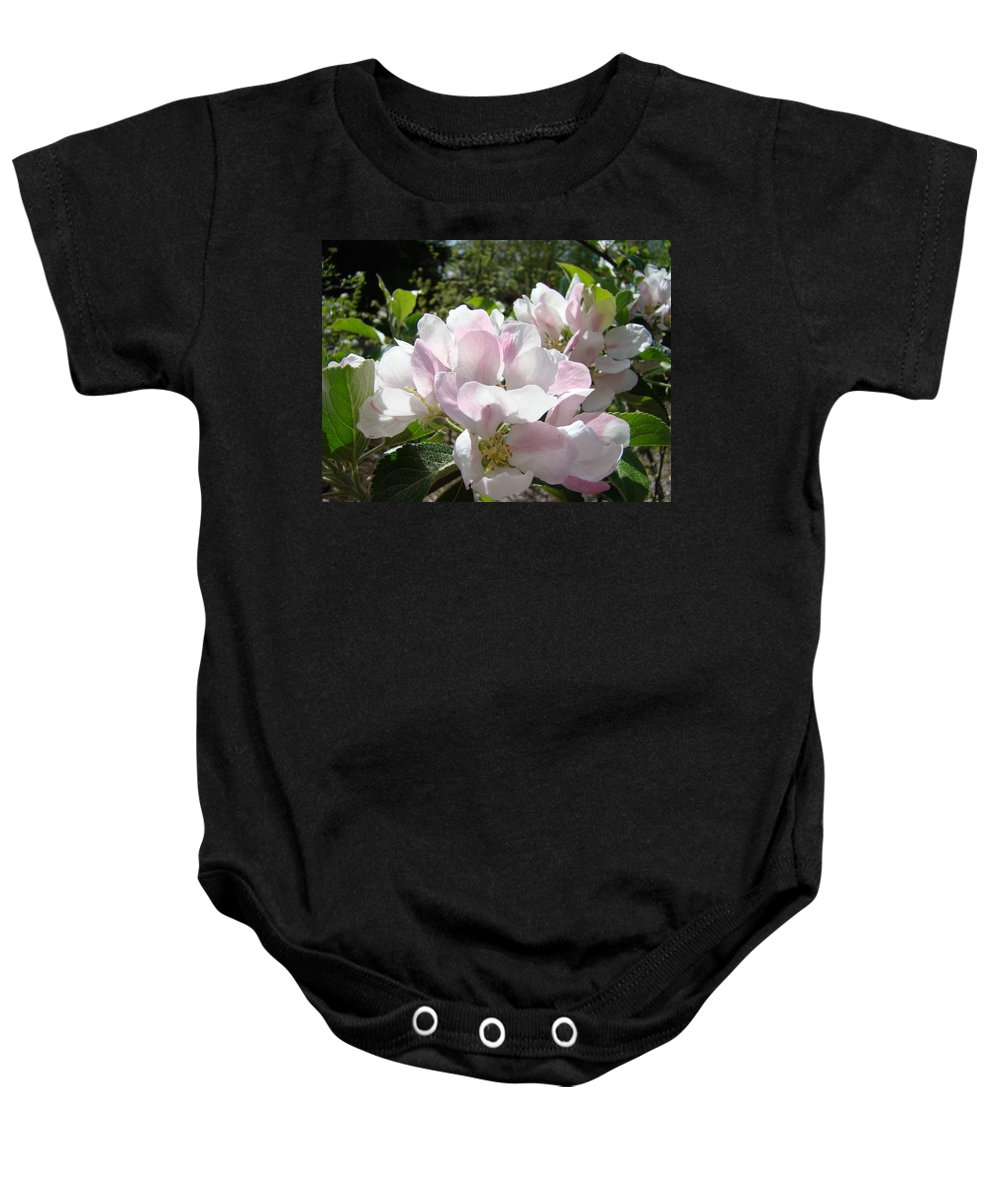 Apple Baby Onesie featuring the photograph Apple Tree Blossoms Art Prints Baslee Troutman by Baslee Troutman