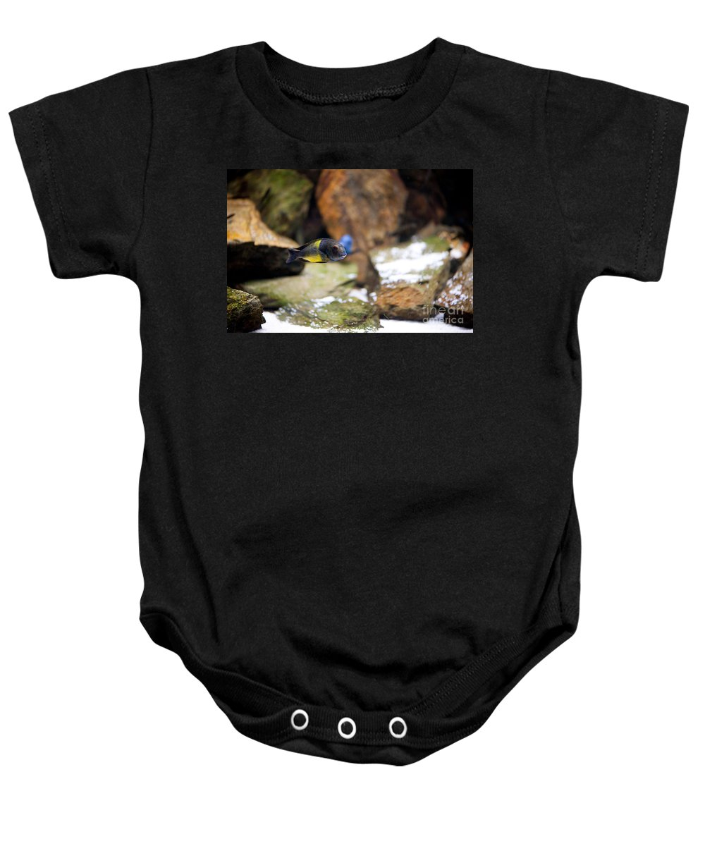 Zoo Baby Onesie featuring the photograph Aquarium Fish At Stones Arrangement by Arletta Cwalina
