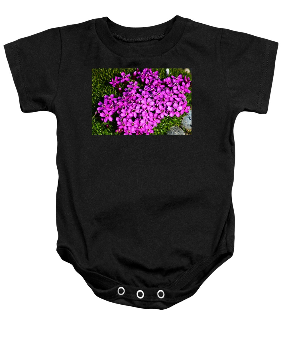 Arctic Baby Onesie featuring the photograph Arctic Wild Flowers by Anthony Jones