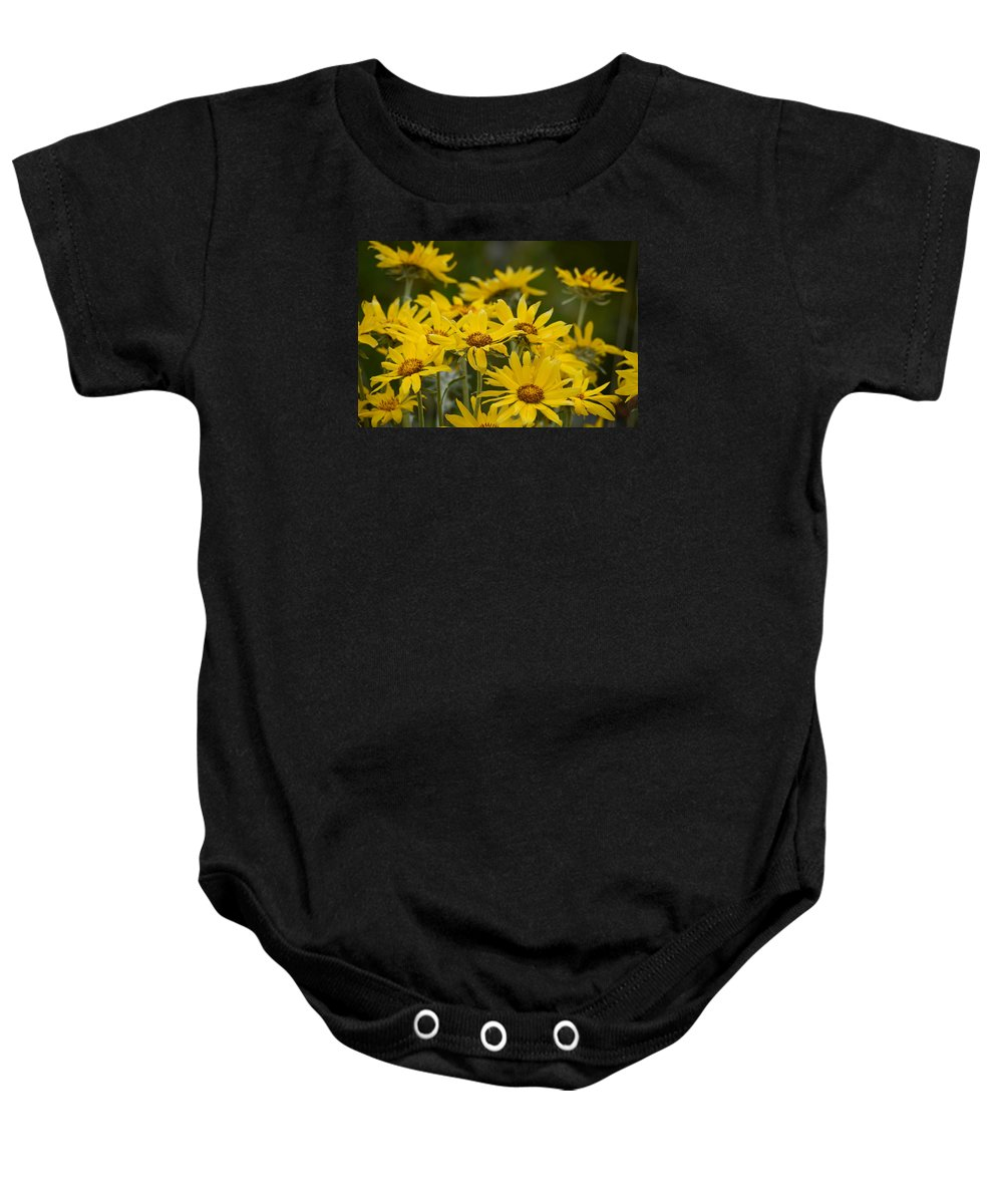 Wild Flowers Baby Onesie featuring the photograph Arrowleaf Balsamroot Bouquet by Whispering Peaks Photography