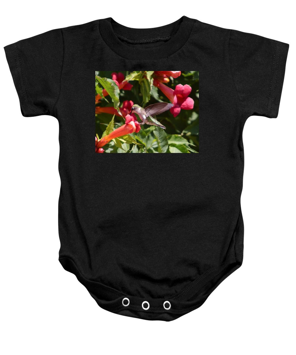 Humming Bird Baby Onesie featuring the photograph Asweet Tooth by Robert Pearson