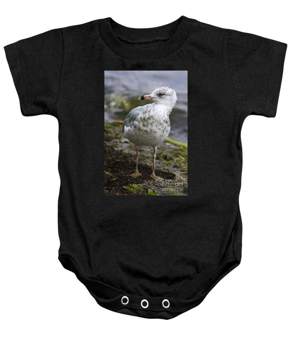 Bird Baby Onesie featuring the photograph At The Beach by Deborah Benoit