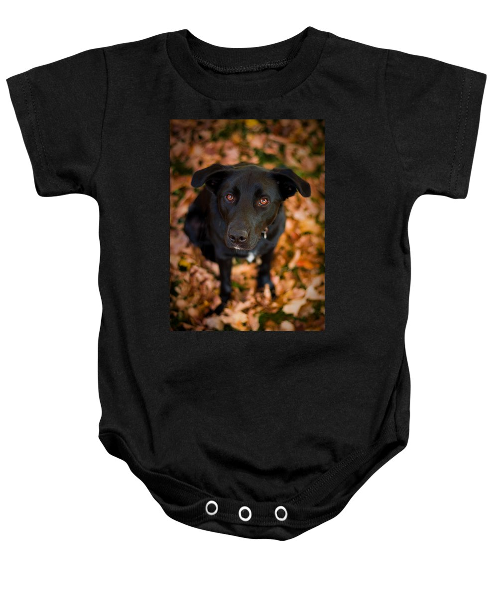 3scape Baby Onesie featuring the photograph Autumn Dog by Adam Romanowicz
