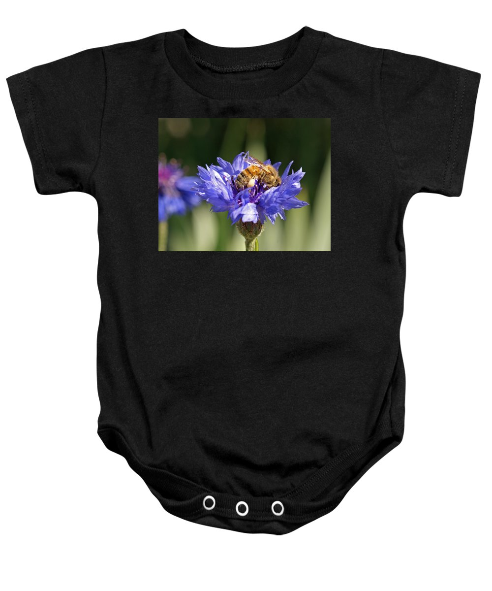 Bee. Flower Baby Onesie featuring the photograph Bachelor Button And Bee by Heather Coen