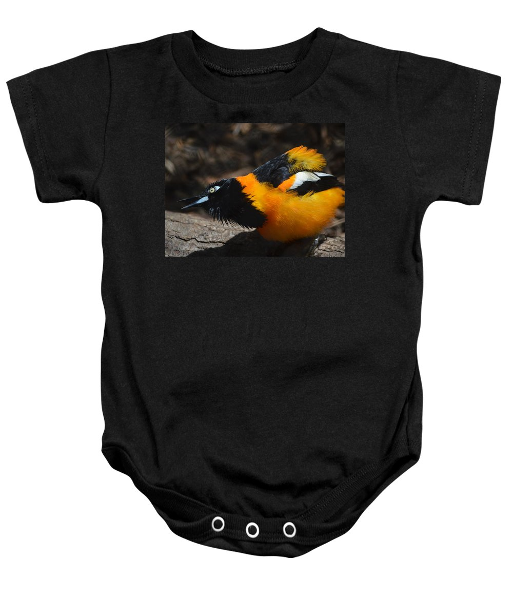 Baltimore Oriole Baby Onesie featuring the photograph Baltimore Oriole 2 by Brad Kennedy