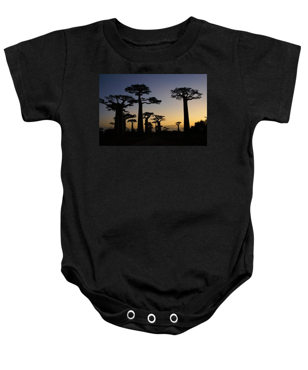 Madagascar Baby Onesie featuring the photograph Baobab Forest At Sunset by Michele Burgess