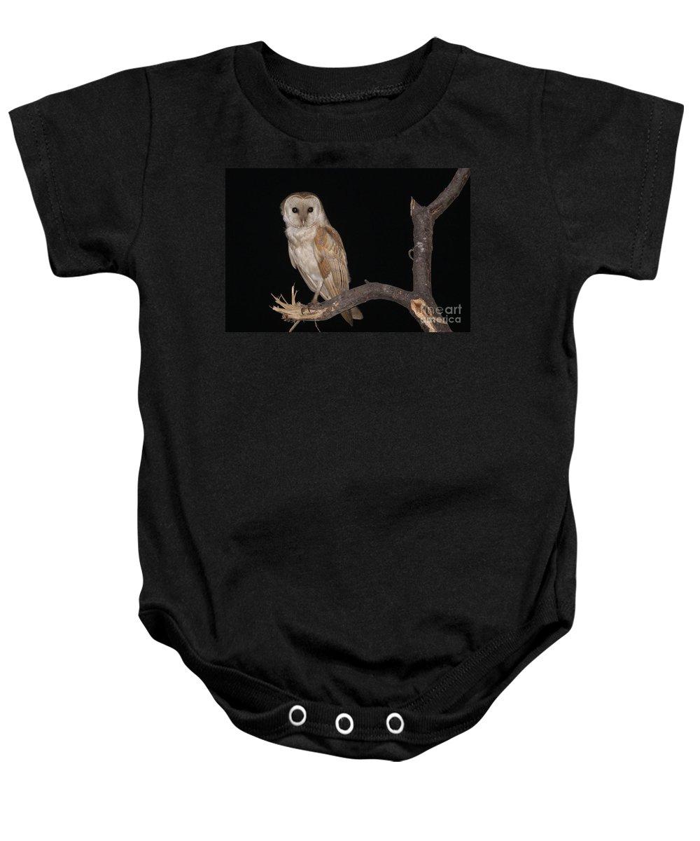 Barn Owl Baby Onesie featuring the photograph Barn Owl Tyto Alba by Alon Meir