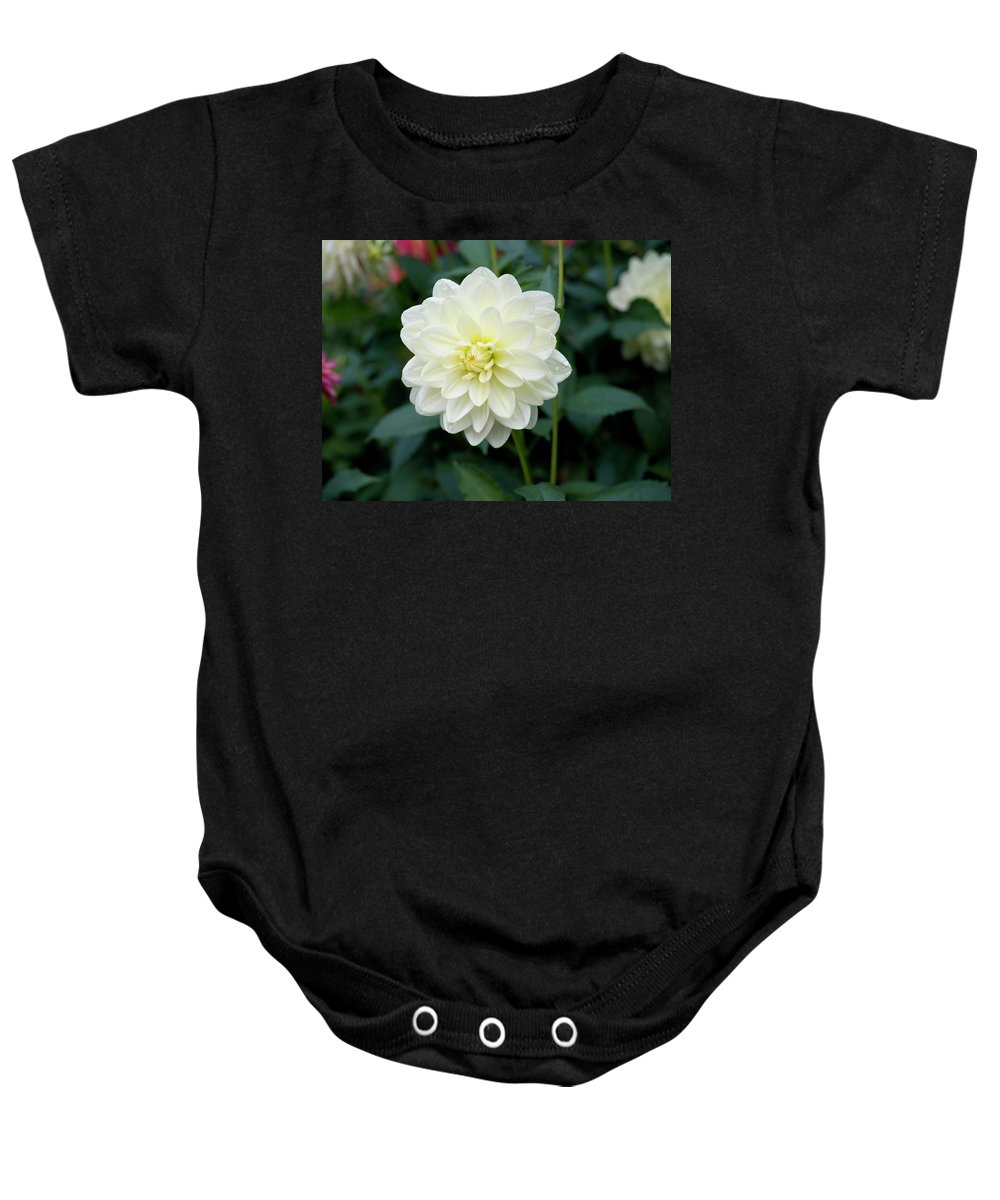 Outdoor Baby Onesie featuring the photograph Beautiful And Fresh Dahlias In The Butchrt Gardens,vancouver Island 3. by Andrew Kim