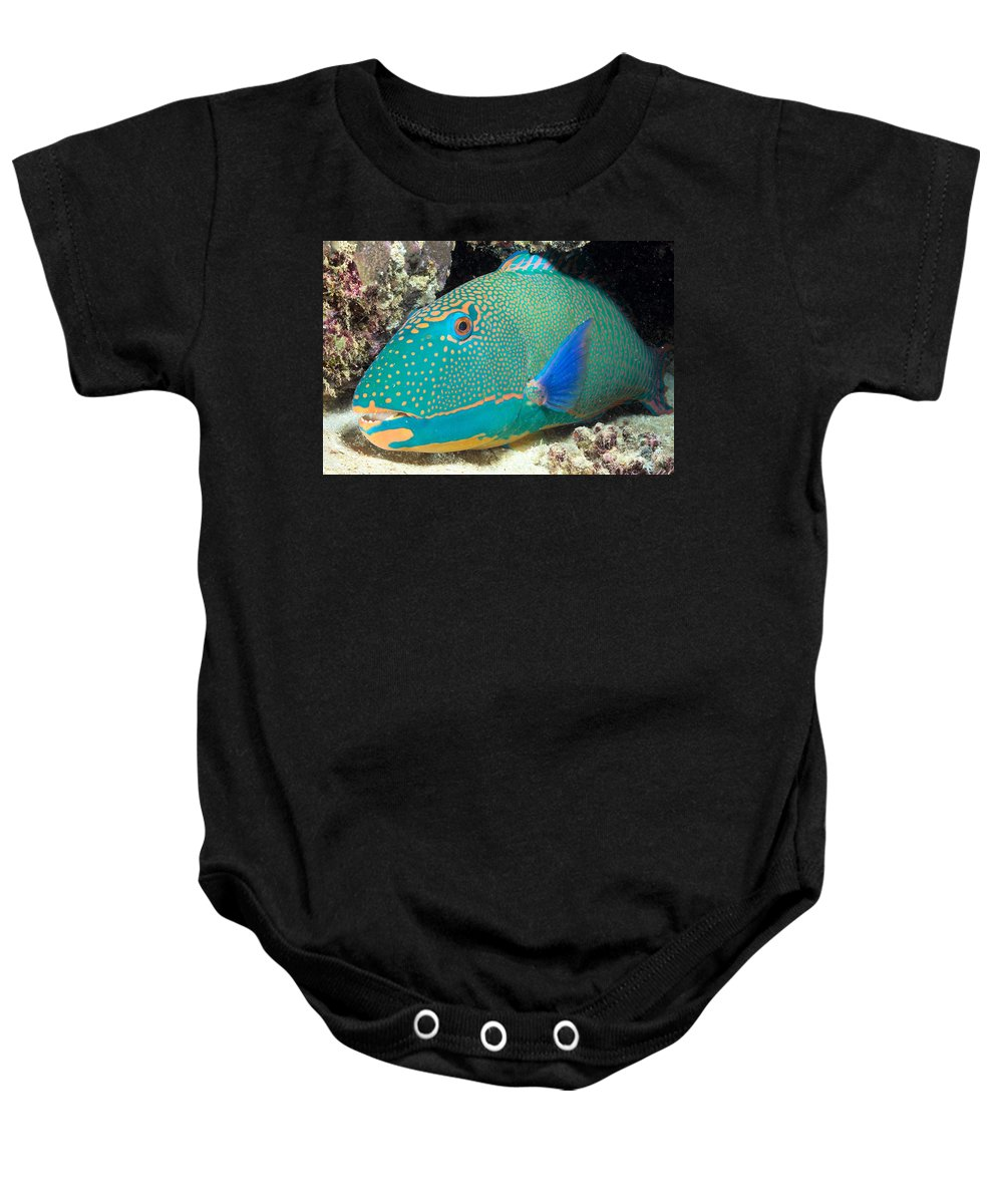 Animal Art Baby Onesie featuring the photograph Bicolor Parrotfish by Dave Fleetham - Printscapes