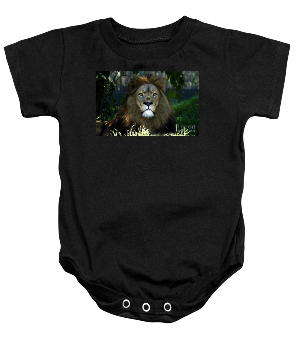 Lion Baby Onesie featuring the photograph Big Cats 79 by Ben Yassa