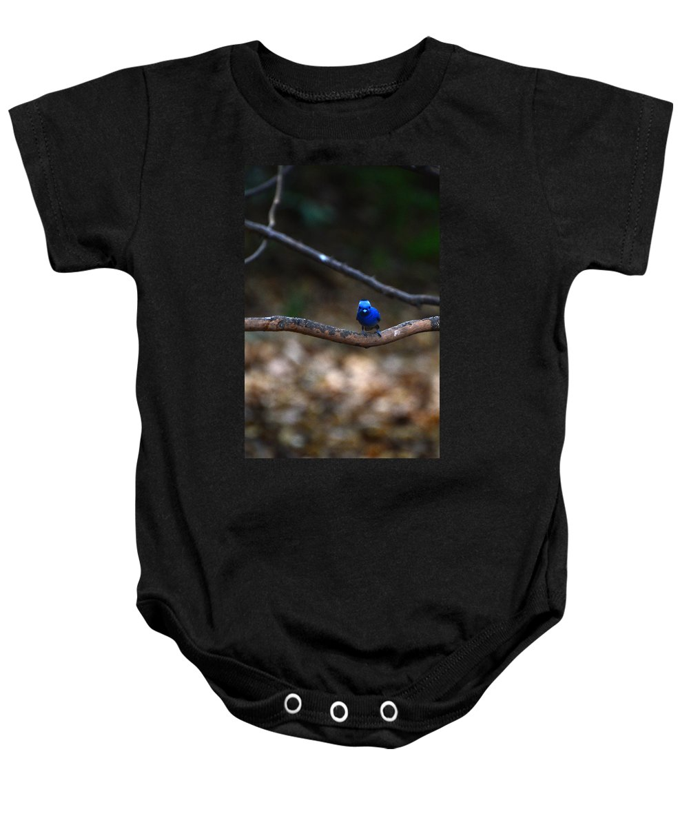 Black-napped Baby Onesie featuring the photograph Black-napped Monarch by David Hohmann