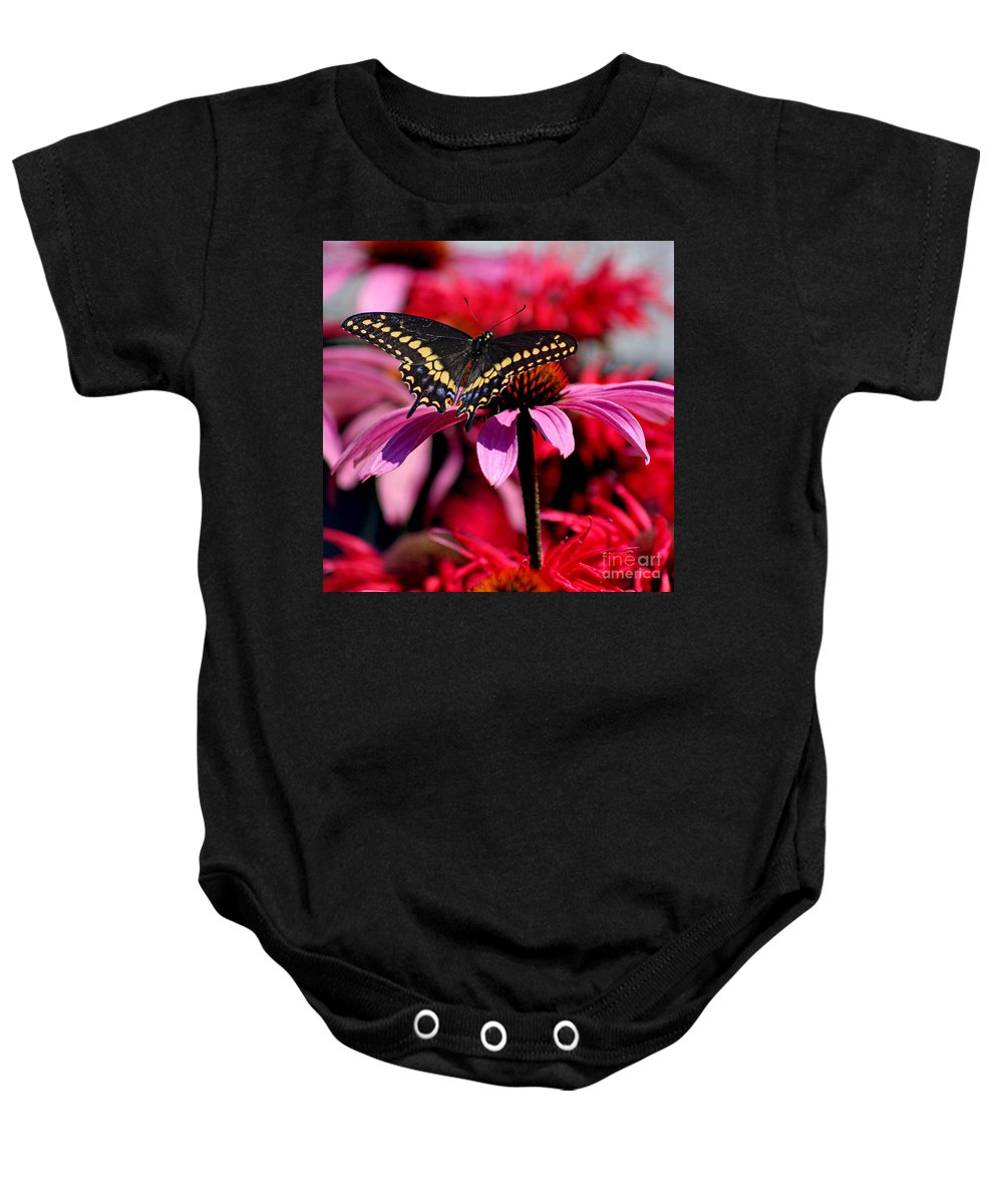 Insect Baby Onesie featuring the photograph Black Swallowtail Butterfly On Coneflower Square by Karen Adams