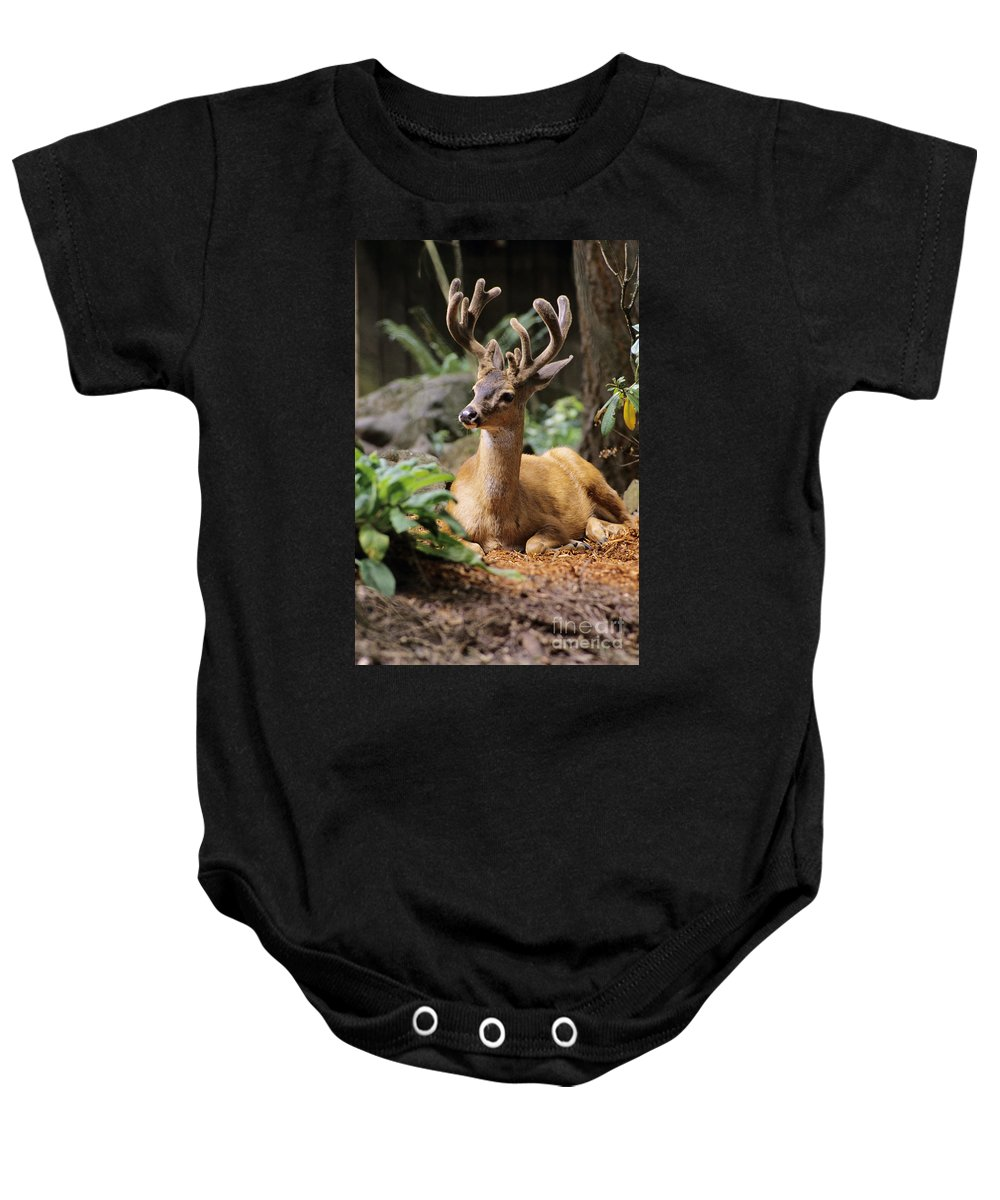 America Baby Onesie featuring the photograph Black-tailed Deer by Greg Vaughn - Printscapes