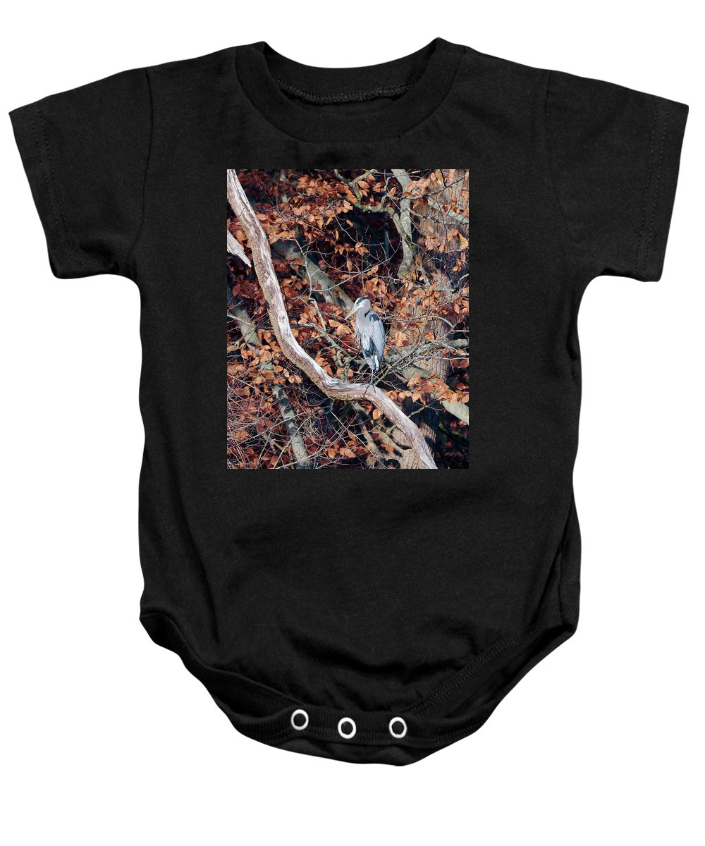 Birds Baby Onesie featuring the photograph Blue Heron In Tree by Paul Ross