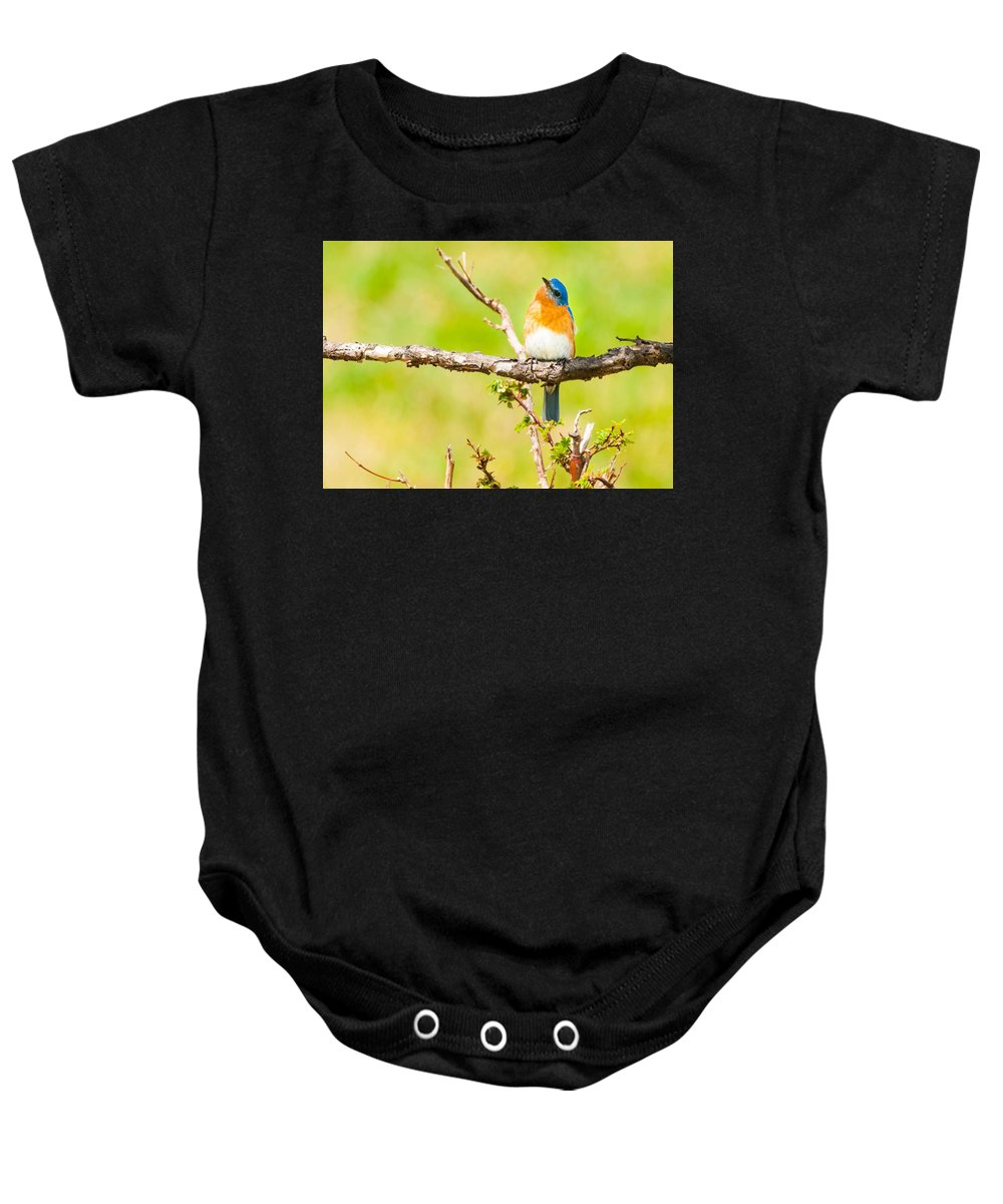 Bird Baby Onesie featuring the photograph Blue In Green by Heather Hubbard