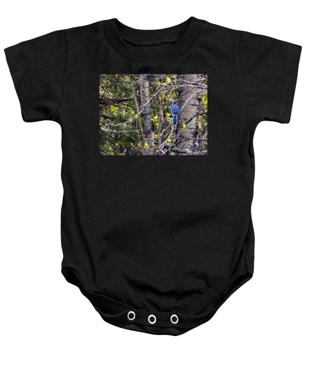 Blue Jays Baby Onesie featuring the photograph Blue Jay 2 by William Tasker