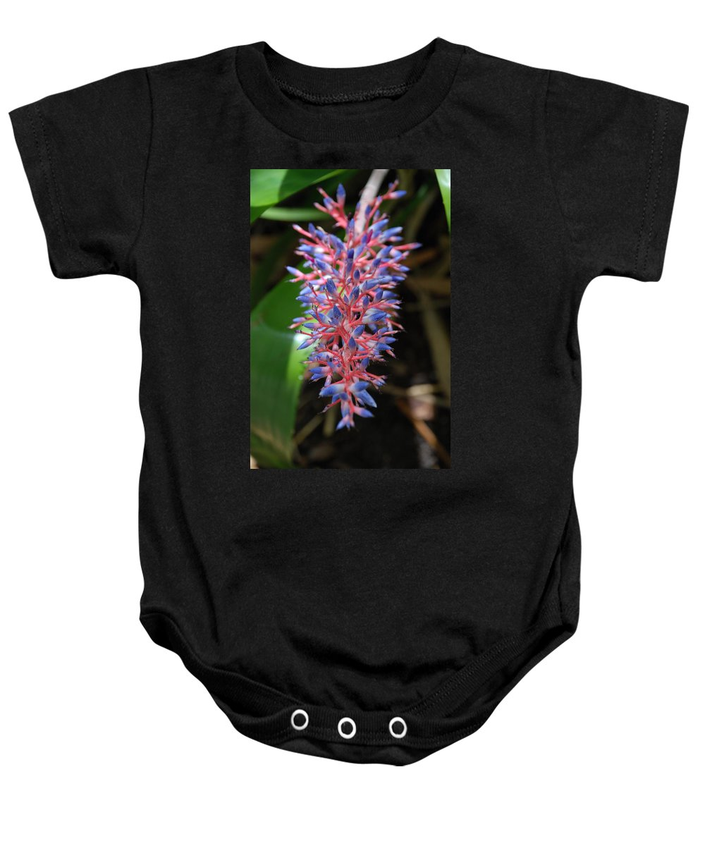 Red Baby Onesie featuring the photograph Blue Red Plant by Rob Hans