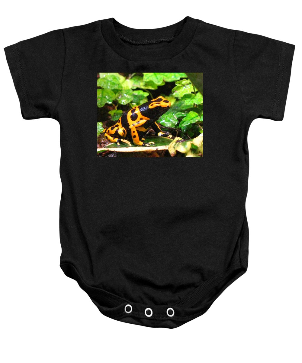 Frog Baby Onesie featuring the photograph Bumble Bee Poison Frog by Donna Brown