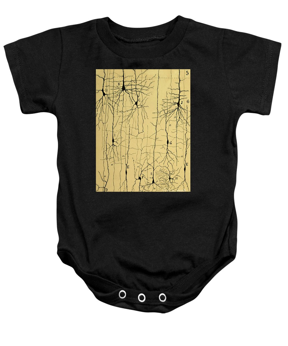 Science Baby Onesie featuring the photograph Cajal Drawing Of Microscopic Structure Of The Brain 1904 by Science Source