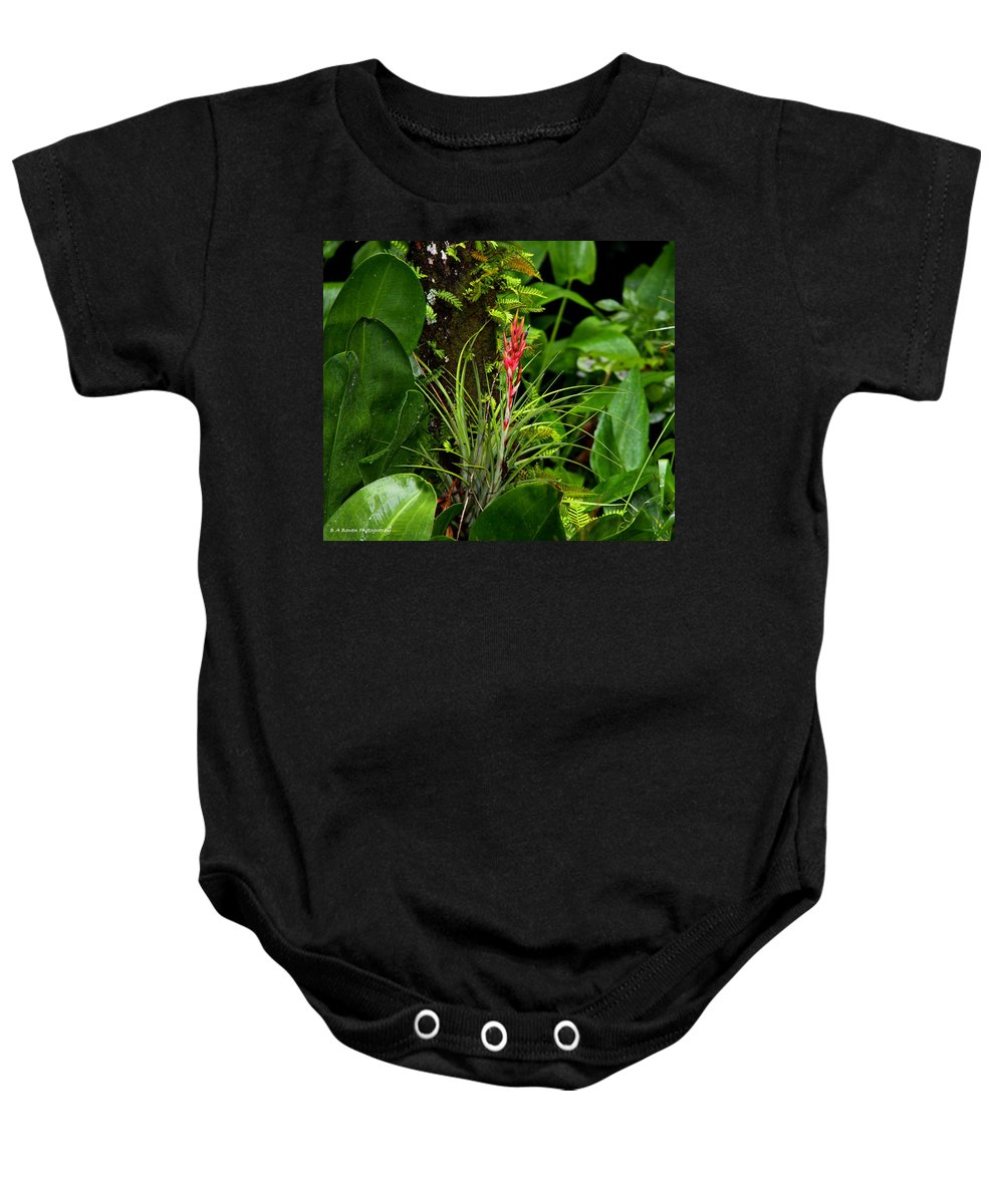Cardinal Airplant Baby Onesie featuring the photograph Cardinal Airplant by Barbara Bowen