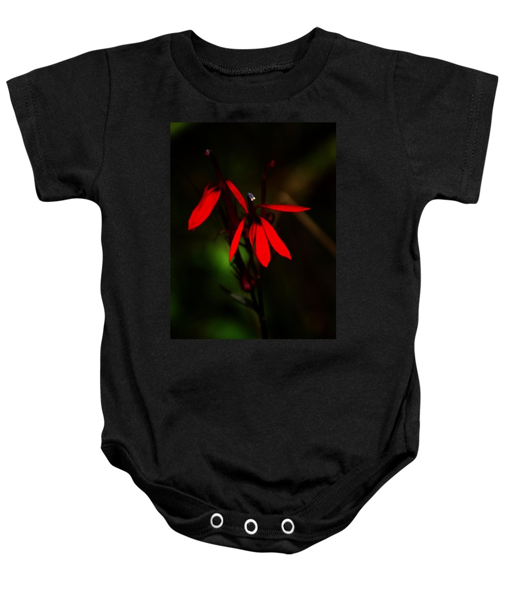 Digital Photograph Baby Onesie featuring the photograph Cardinal Plant by David Lane