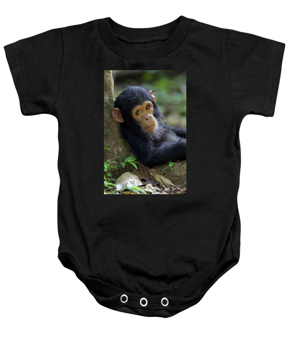 Mp Baby Onesie featuring the photograph Chimpanzee Pan Troglodytes Baby Leaning by Ingo Arndt