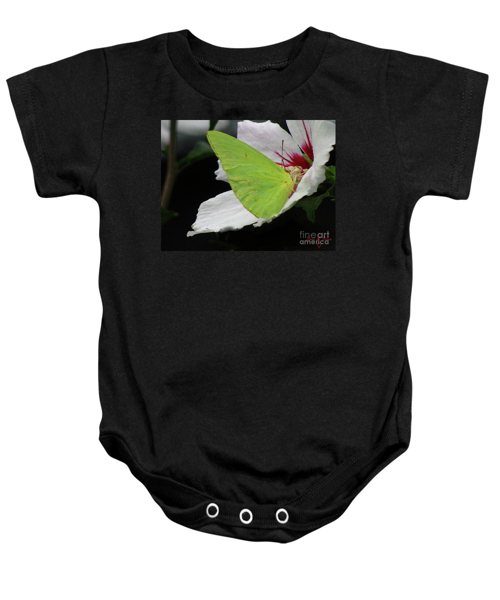 Insect Baby Onesie featuring the photograph Cloudless Giant Sulphur Butterfly by Donna Brown
