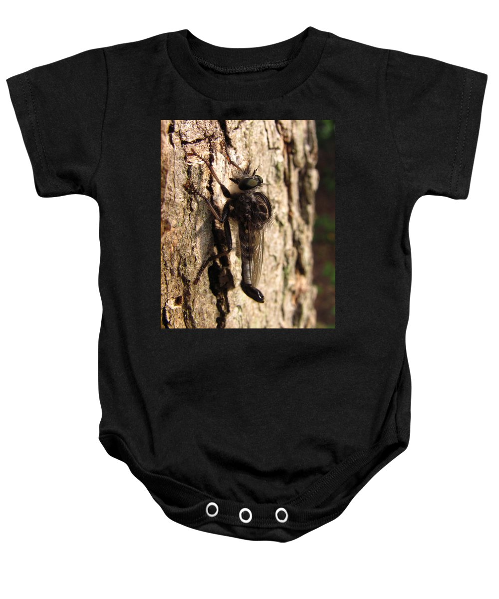 Club Tailed Robber Fly Images Club Tailed Robber Fly Prints Predatory Insects Predatory Fly Prints Entomology Biodiversity Forest Ecology Old Growth Forest Conservation Nature Baby Onesie featuring the photograph Club Tailed Robber Fly by Joshua Bales
